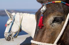 Donkey in Thira. Stock Photos