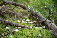 Toadstool mushrooms in the forest - stock photo