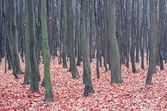 autumn deciduous forest - stock photo
