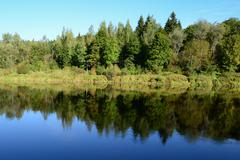 Trees symmetric reflection in a river - stock photo