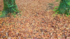 Ground covered with leaves Stock Footage