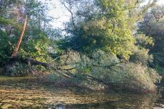 tree fallen in water - stock photo