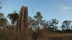 TIme Lapse of Termite mound Australia HD - stock footage