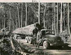 Hauling logs - free stock photo