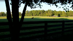 Horse Ranch at Sunset Tree Stock Footage