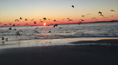 Swarm of birds taking flight at beach at sunset in slow motion Stock Footage