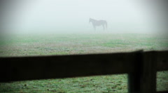 Horse Sillouette in Morning Fog - stock footage
