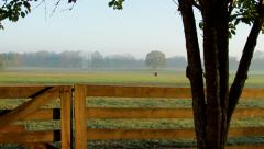 Morning Light Horses Ranch Pan Stock Footage