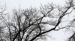 Tree branches on Gloomy Sky Stock Footage