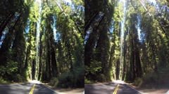 3d avenue of the giants red woods with traffic 2 Stock Footage
