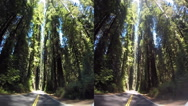 Stock Video Footage of 3d avenue of the giants red woods with traffic 2