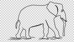 Elephant line drawing animation with transparent background Stock Footage