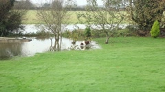 Cute dogs enjoying flooded garden Stock Footage
