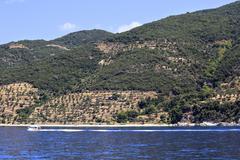 Olive groves on Holy Mount Athos. - stock photo