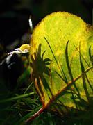 Shadow of daisy on an autumn leaf Stock Photos