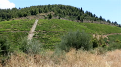 Vineyards on the slopes. Stock Footage