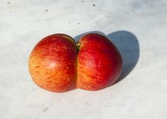 fresh apples with funny deformations - stock photo