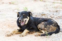 stray dog - stock photo