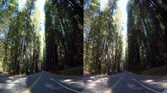 3d driving down avenue of the giants 2 Stock Footage