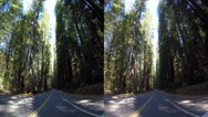 Stock Video Footage of 3d driving down avenue of the giants 2