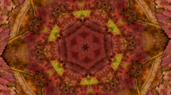 Natural color autumn texture Stock Footage