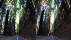 3d avenue of the giants Stock Footage