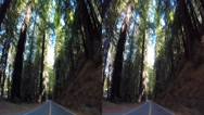 Stock Video Footage of 3d avenue of the giants