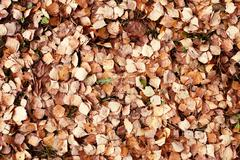 Alder leaf litter on the ground Stock Photos