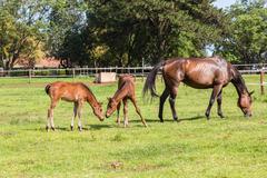 Horse foals colt stud farm Stock Photos
