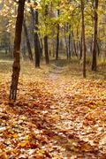autumn park in october. Golden leaves of the sun - stock photo