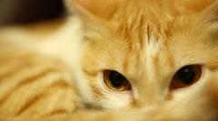 Closeup of Cat at home Stock Footage