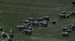 Elephants Marsh Migration Wildlife Marching - stock footage