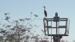 Stoic Crane on Channel Marker on the Delta Stock Footage