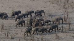 Elephants Herd Africa Mud Stock Footage