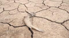 Dead fish drought lake  heat Stock Footage
