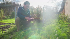 Older men collects local organic vegetables from the garden - stock footage