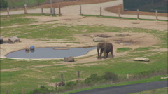 Elephants Wildlife Ostrich Zoo Stock Footage