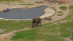 Elephants Wildlife Zebra Zoo Stock Footage