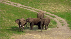 Elephants Wildlife Zoo Stock Footage
