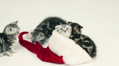 Kittens playing and sitting in Santa hat Stock Footage