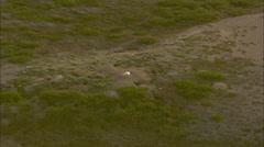 Aerial Footage Tundra Wolf Stock Footage