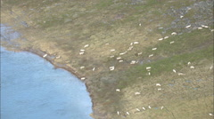 Aerial Footage Tundra Caribou Stock Footage