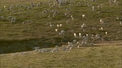 Heard of animals walking Stock Footage
