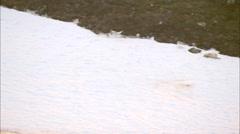 Caribou Herd Stock Footage