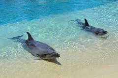 Captive dolphins Stock Photos