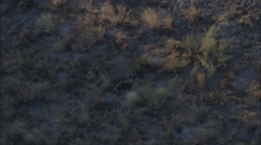 Savanna African Wild Dogs Africa Stock Footage