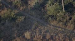African Wild Dogs Savanna Stock Footage