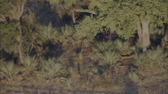African Wild Dogs Savanna Jeep Stock Footage