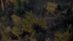 African Wild Dogs Savanna Pack Stock Footage