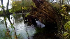 old tree trunk with running creek - stock footage